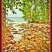 The Creek to Lake McDonald  by joysfocus