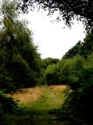 13th Sep 2013 - Cannock Chase