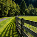 Fence-line and shadows by kathyladley