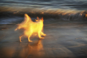14th Sep 2013 - Dog at Dusk