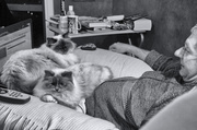 16th Sep 2013 - Crazy Cat Man