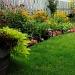 Garden by dora