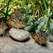 Four Baby Chipmunks by paintdipper