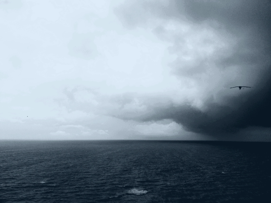 Fly into the storm... by amrita21