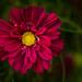 Ringve botanical garden 2 by elisasaeter