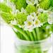 Fleurs du jour by kazlamont