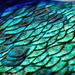 Turquoise by cdonohoue