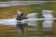 21st Sep 2013 - Lake Runner