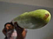 4th Sep 2010 - Gourd Blimey!!