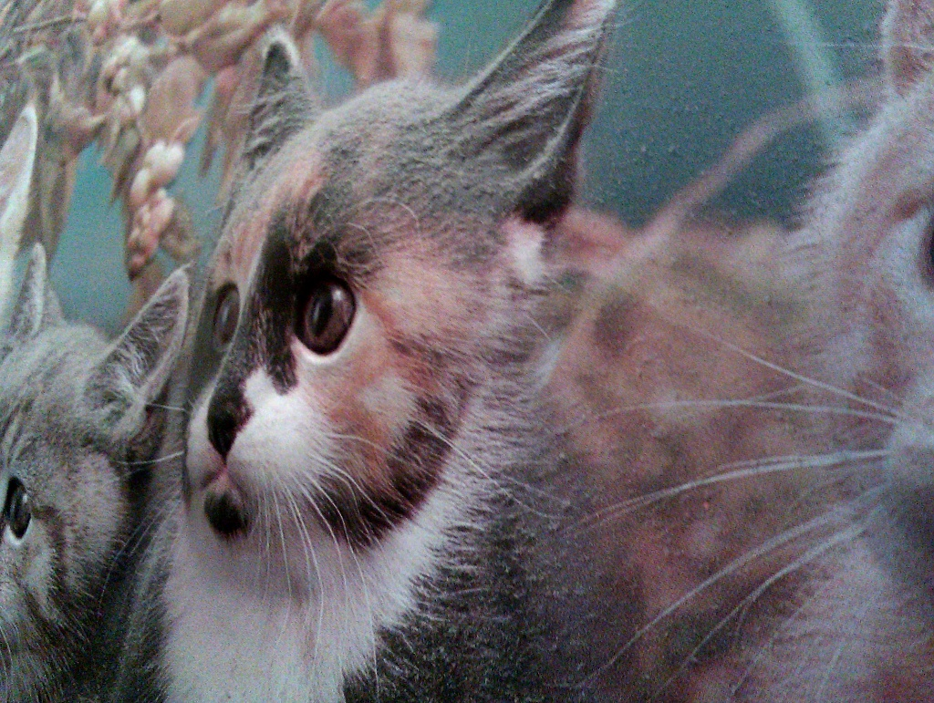 Cat by berend
