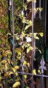 26th Sep 2013 - At night --through the garden gate !