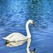 Swan Lake by skipt07