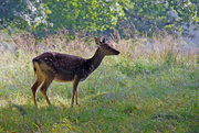 2nd Oct 2013 - Woburn Deer Park