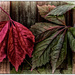 Red & Green Leaves by ivan