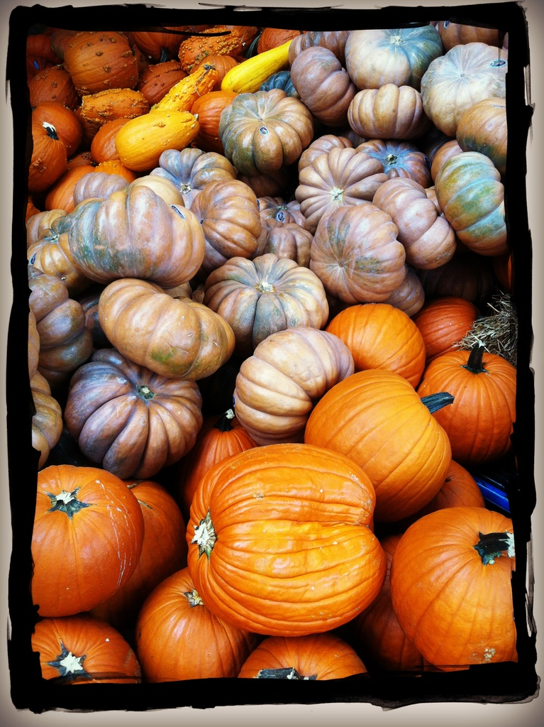 Pumpkin Time by jamibann
