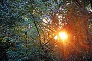 2nd Oct 2013 - Sun Creeping In