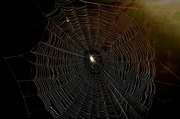 5th Oct 2013 - The Web