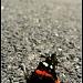 Butterfly In Space by digitalrn