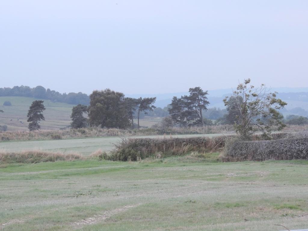 limed fields by roachling