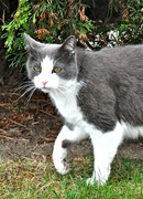 5th Oct 2013 - Kitty, just passing by............