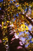 5th Oct 2013 - Turning Birch