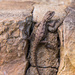 The Original Rock Climber by kathyladley