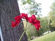 6th Sep 2010 - Flower