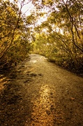 5th Oct 2013 - The road less travelled.