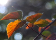 9th Oct 2013 - Light and Time