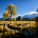 Fall Color Arriving In Bishop  by jgpittenger