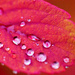 Drops on a autumn leaf by elisasaeter