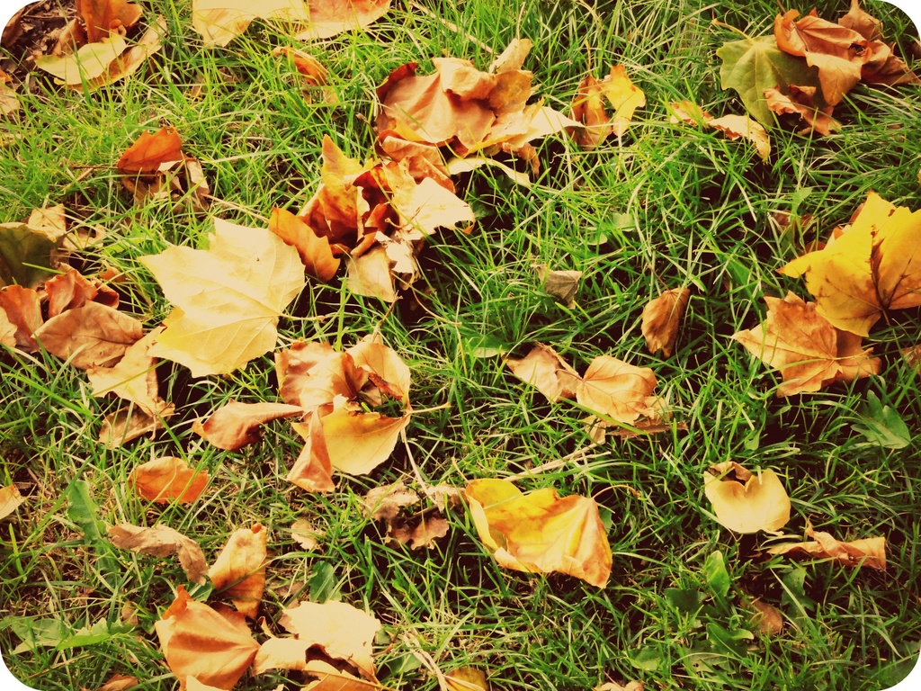 Evidence of Autumn by beryl