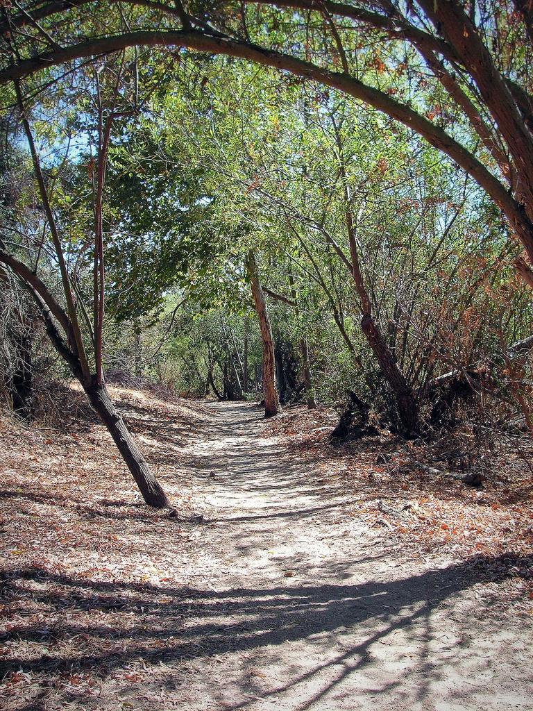 Local Trail by pasadenarose