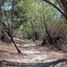Local Trail