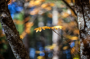 4th Oct 2013 - Fall Suspended