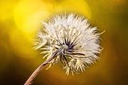 10th Oct 2013 - Make a wish