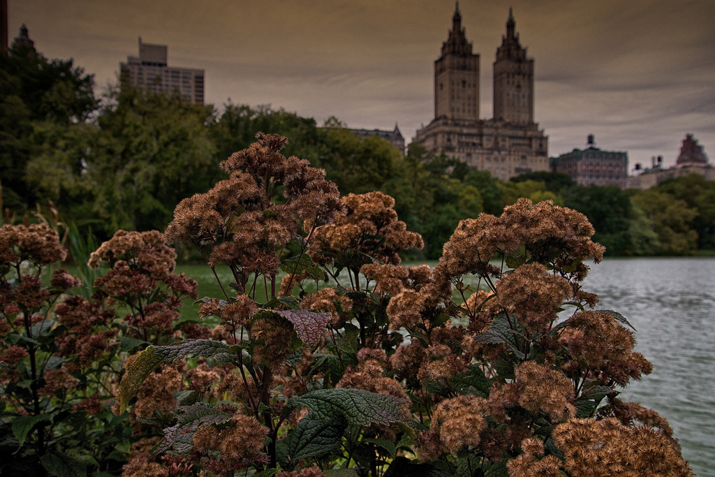 New York's Central Park by taffy