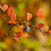 Blueberries by ragnhildmorland