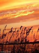5th Sep 2010 - Edisto Island Sunset