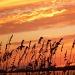 Edisto Island Sunset by peggysirk