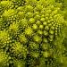Fractal Vegetable by harvey