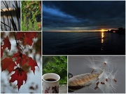 13th Oct 2013 - Sunday Morning Collage