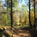 A glorious day in the forest by bruni