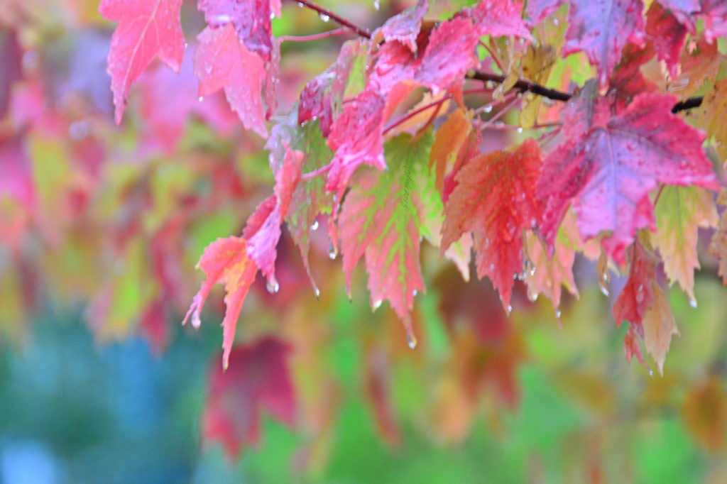 fall colours by summerfield