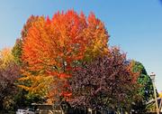 13th Oct 2013 - Fall in Tualatin
