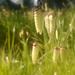 Grass Seeds by salza