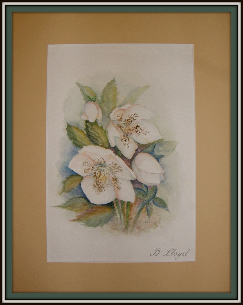 Watercolour--Hellebore  by beryl