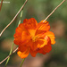 Orange #1 by falcon11