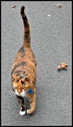 15th Oct 2013 - Helen, the friendly cat on our walk.