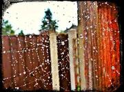 15th Oct 2013 - Cobweb and raindrops